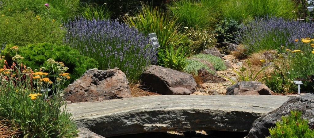 Install a Water Wise Landscape